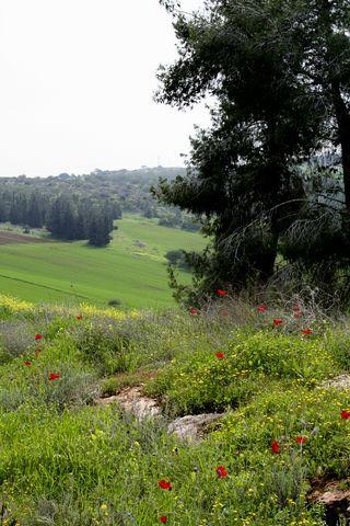 fields-gilb